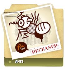 Ants Deceased