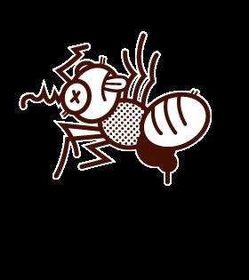 Ants - Pest101