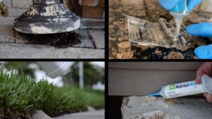 Different types of Ant Treatment